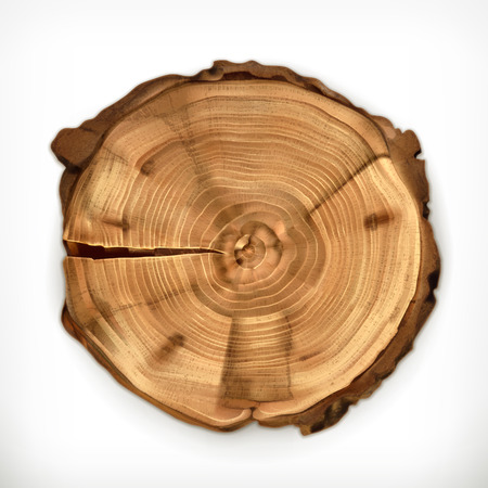 rings on a tree: Tree stump, round cut with annual rings vector