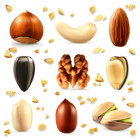 oil crops: Nuts, vector icon set