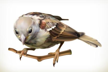 sparrow: Sparrow, vector illustration Illustration