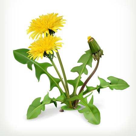 Dandelion flowers, vector icon Stock Illustratie