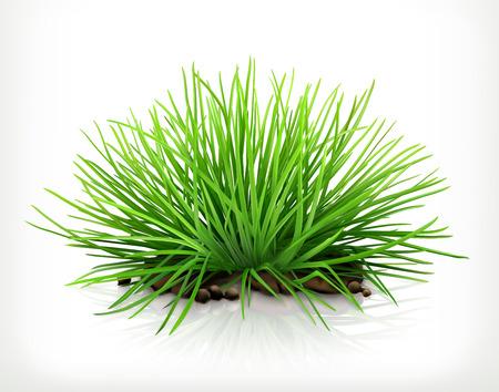 grass vector: Fresh grass, vector icon