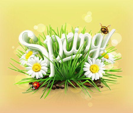 bee garden: Spring, time for a picnic, grass, flowers of camomile, a ladybug and a bee in the garden, an universal background