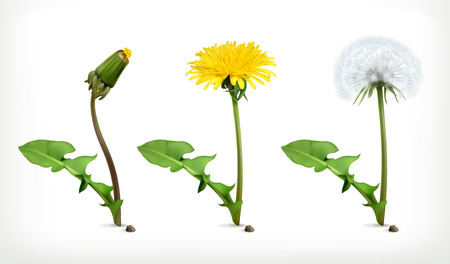 isolated on yellow: Dandelion flowers, vector icon set