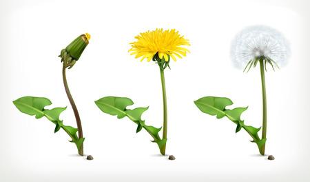 Dandelion flowers, vector icon set