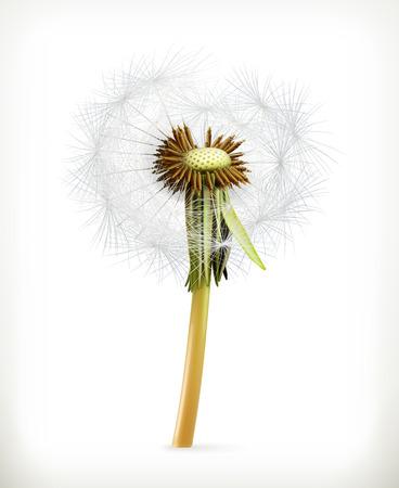 blowing dandelion: Head of dandelion, summer flowers, vector icon