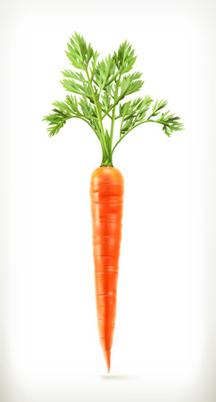 carrot isolated: Fresh young carrot, health food, vector icon