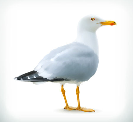 Sea gull, vector icon