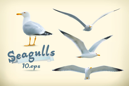 at sea: Sea gulls vector icon set Illustration