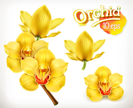 orchid isolated: Orchid flowers, vector icon set Illustration