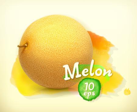 Melon, vector illustration Illustration