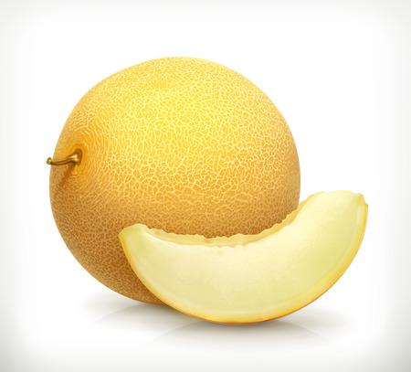 Melon, vector icon