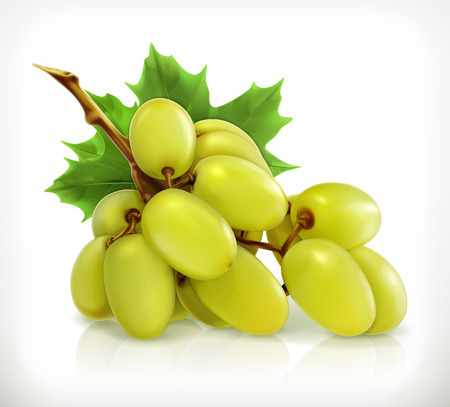 grapes on vine: Bunch of grapes, vector icon
