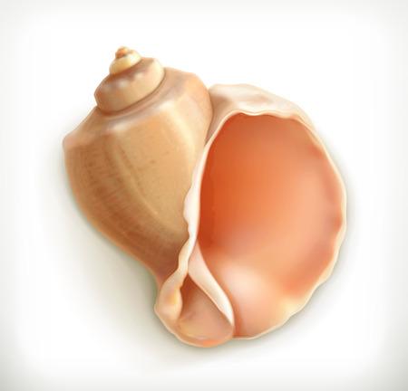 conch: Seashell, vector icon Illustration