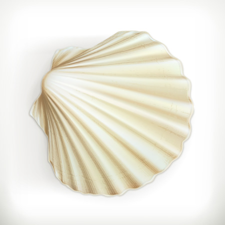 scallop shell: Seashell, vector icon Illustration
