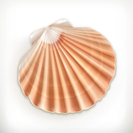 seashell: Seashell, vector icon Illustration