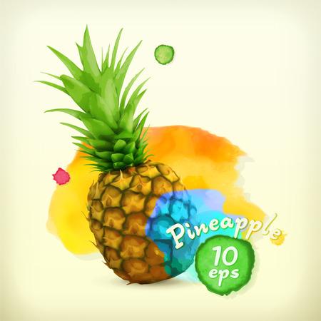 Pineapple watercolor, vector illustration Vector