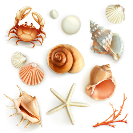 sea shells on beach: Seashells, set vector icons Illustration