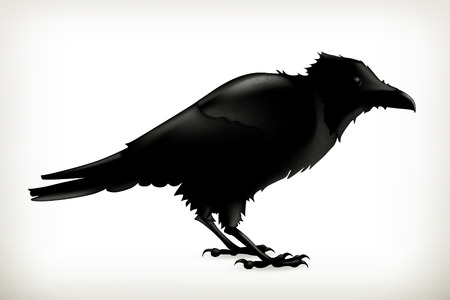 crow: Black raven, vector silhouette Illustration