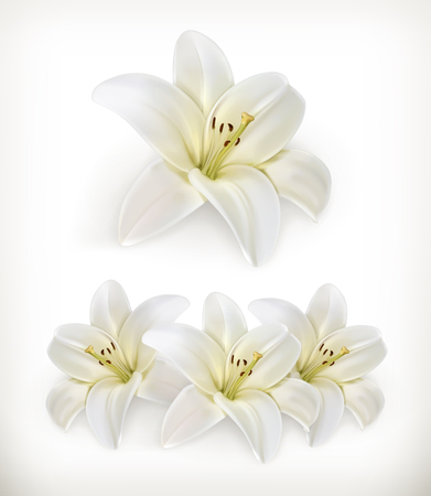 white: Lirio blanco, iconos vectoriales
