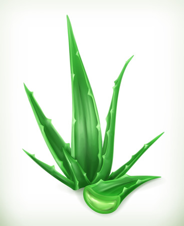 Aloe, vector icon