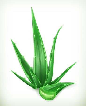 aloe vera: Aloe, vector icon