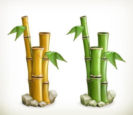 bambu: Bambú, vector icon Vectores