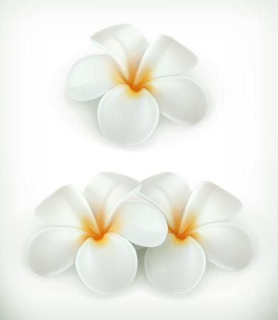 tahiti: White flowers, vector icons