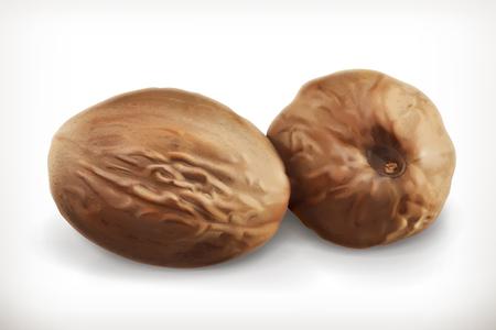 nutmeg: Nutmeg, vector icons, isolated on white background