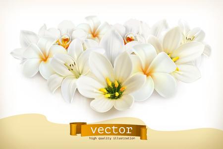 Ramo de flores blancas, ilustración vectorial, aislados en fondo blanco Foto de archivo - 46634888