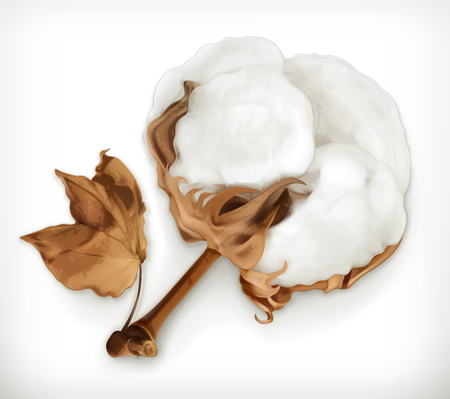 cotton plant: Cotton, vector icon isolated on white background