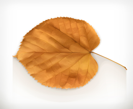 dry leaf: Dry leaf, autumn vector icon