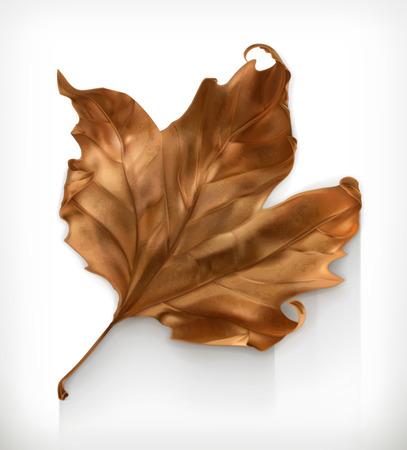 hojas secas: Hoja de arce seca, icono otoño vector