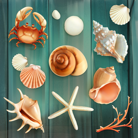 Set with seashells, vector icons Illustration