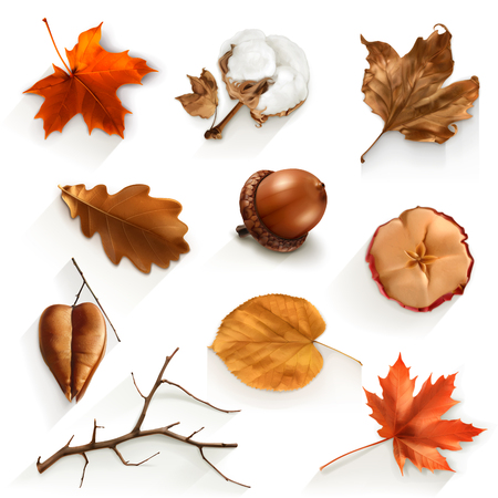 acorn seed: Set with autumn scrap icons, vector elements Illustration