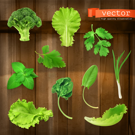 leaf lettuce: Set with greens, vector icons on wooden board Illustration