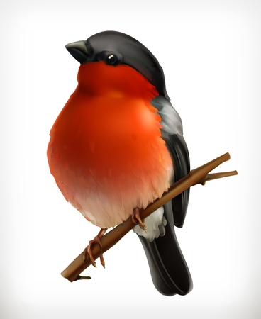 bullfinch: Bullfinch on the branch, vector icon, isolated on white background