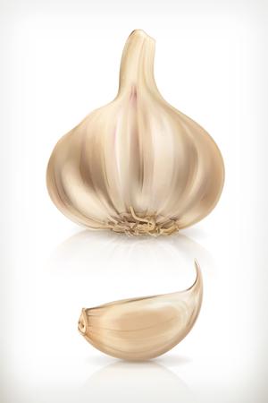 garlic: Ajo, iconos vectoriales, aislado en fondo blanco