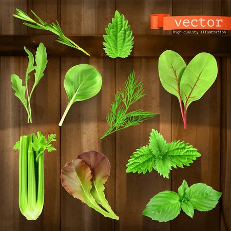 spinach: Set con los iconos vectoriales hierbas sobre tabla de madera