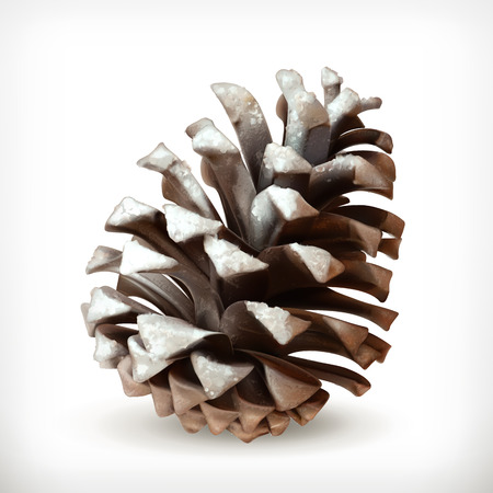 siberian pine: Pine cone vector icon in snow, isolated on white background