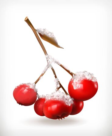 single  object: Rowan branch vector icon with snow, isolated on white background