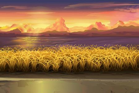 Sunset landscape vector: Sunset, vector lĩnh vực minh họa phong cảnh