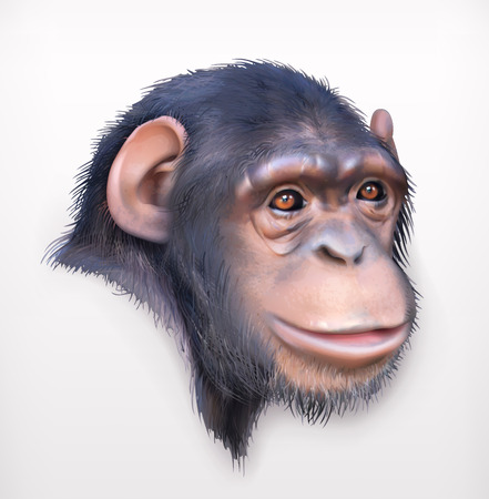 monkey face: Chimpanzee head, realistic vector illustration,  isolated on white background