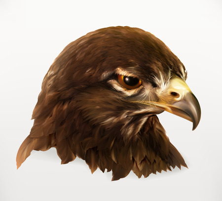 Eagle head, realistic vector illustration, isolated on white background