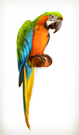 Parrot macaw, vector illustration,  isolated on white background