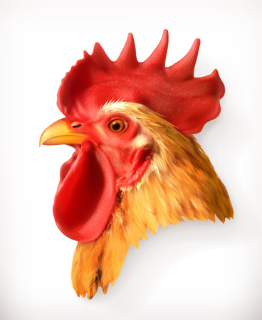 Rooster head, realistic vector illustration, isolated on white background Vectores