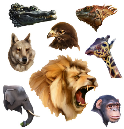 3d lion: Set with animal heads, low poly style icons, isolated on white background