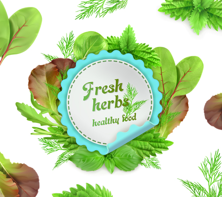basil: Fresh herbs, vector illustration, on white background