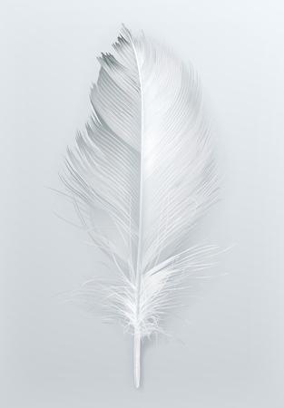 piuma bianca: Piuma di uccello, icona su bianco