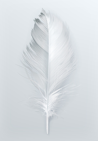 white feather: pluma de pájaro, icono en blanco