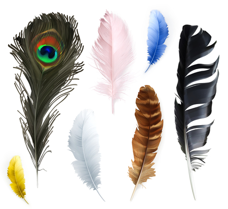 3d dove: Set with feathers, icons, isolated on white background